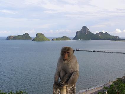 Affe in einer Bucht in Thailand